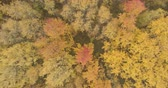 непосредственно над : Aerial top view sideways shot over yellow golden birch forest in autumn