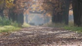 carvalho : Slow motion autumn alley in park low angle Stock Footage