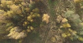 октябрь : Aerial top view forward shot over field and autumn forest in the morning