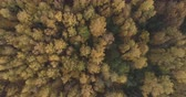 непосредственно над : Aerial top view spin shot over field and autumn forest in the morning