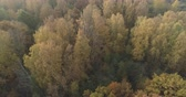 lipa : Aerial backward tilt shot over autumn forest on a sunny morning Wideo