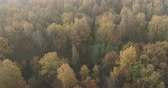 lipa : Aerial forward shot over autumn forest on a sunny morning