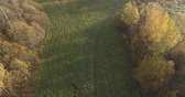lipa : Aerial forward tilt shot over autumn rural landscape with field and forest in the morning Wideo