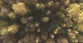 непосредственно над : Aerial top view forward shot over autumn forest in the morning
