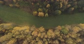непосредственно над : Aerial top view side shot over yellow golden birch forest in autumn