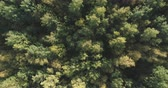 непосредственно над : Aerial ascent top view flight over autumn trees in forest in september