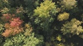 непосредственно : Aerial descent top view flight over autumn trees in forest in september