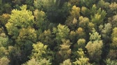 dusk forest : Aerial forward flight over autumn trees in forest in september