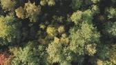 diretamente acima : Aerial rotate top view flight over autumn trees in forest in september Stock Footage