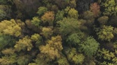 вперед : Aerial top view forward flight over autumn trees in forest in october