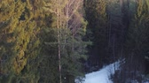 скандинавский : Aerial footage rising over fir forest in winter season