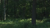 lindeboom : Driving plate side view of green mixed forest on summer sunny day Stockvideo