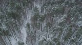 sibérie : Aerial forward fly with tilt over winter frozen pine forest Vidéos Libres De Droits