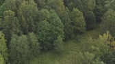 береза : Aerial flying forward over summer forest on a cloudy day