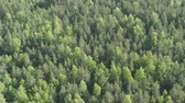 betulla : Aerial side flight over mixed forest on a sunny summer day
