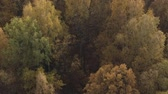 dub : Aerial forward tilt shot over autumn forest in the morning Dostupné videozáznamy