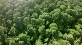 very low : Aerial turning around above dense forest treetops thesis woods Consists of deciduous trees very green leafs during summertime beautiful foliage very green color and sunshine ook popping up 4k