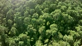 very low : Aerial fast turning around above dense forest treetops thesis woods Consists of deciduous trees very green leafs during summertime beautiful foliage very green color and sunshine ook popping up 4k