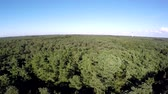 very low : Aerial drone flying low over dense forest landscape showing treetops thesis woods Consists of deciduous trees very green leafs Because Of summertime blue sky in the background beautiful birdview 4k