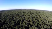very low : Aerial drone flying high over dense forest landscape showing treetops thesis woods Consists of deciduous trees very green leafs Because Of summertime blue sky in the background beautiful birdview 4k