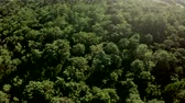 very low : Aerial bird-eye view flying low over dense forest landscape showing treetops thesis woods Consists of deciduous trees very green leafs Because Of summertime sky seen no Because Of camera tilt 4k Stock Footage