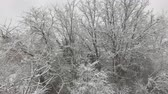 cold winter : Snow falling on trees