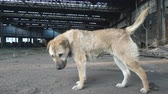 recession : Abandoned stray dog in Ruin factory