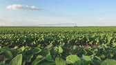 разбрызгиватель : Soybean with irrigation sprinklers field