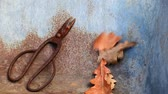 buda : old rusty scissors acorn leaves nobody hd footage Stock Footage