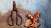 rolamento : old rusty scissors acorn leaves nobody hd footage Stock Footage