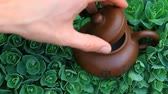 bebida quente : Chinese hot teapot on  succulent plant  hd footage
