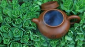 чайник : Chinese hot teapot on  succulent plant  hd footage