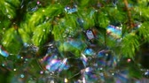 ginepro : fir tree soap bubbles background hd footage Filmati Stock