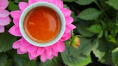 czerwona róża : black tea cup flower background nobody hd footage Wideo
