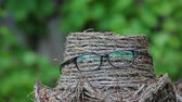 tinted : hat glasses wind tree background nobody hd footage Stock Footage