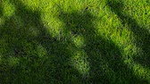 green grass tree shadow hd footage nobody