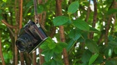 old camera tree background hd footage nobody Dostupné videozáznamy