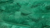 finomság : green soft bird feather background Stock mozgókép
