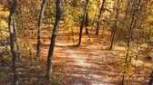 Autumn scenery. Descending from top of trees into golden fall park or forest with walk path and beautiful foliage cover. Tranquil seasonal scene