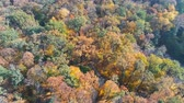 bloemkool : Autumn forest aerial view. Multicolored fall trees in city park. Beautiful colorful seasonal foliage