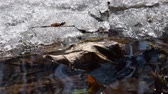ice melting : Early spring landscape of the snow in the forest. Melting snow in the spring in the forest. Stock Footage
