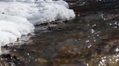 ice melting : Early spring landscape of the snow in the forest. Streams flow in the spring in spring. Stock Footage