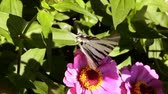 Butterfly on blooming flowers