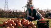 Farmer choosing the best pumpkins for sale Stock Footage