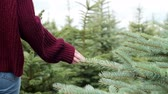 выборе : Woman choosing christmas tree