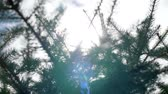 film : Sunlight in the winter forest