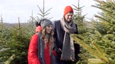 decisão : Couple found a perefect christmas tree