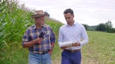 correto : Men talking on the corn farm