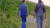 explicando : Rear view of farmers walking across the corn field