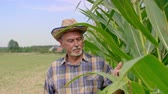 idosos : Farmer controlling his corn crop Stock Footage